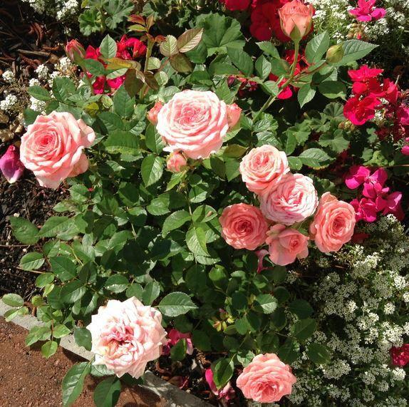 Roses kbelík růží kytice růží kytice růží fialové, růže v skle, růže kytice, růže Bush růžové růže, Vízcseppes růže, png Růže - eva6 Blog - The -Csiza J-néErzsike přítelkyni, A-Antalffyné Irene, A-Csorbáné Ildikó, A-Gizike můj přítel, můj přítel Ildykó-A, A-Kata přítelkyně, přítelkyně Klárika-A-Klementinától I, A-Kozma Anna Lidia, A-Margitka můj přítel, Maroko-přítelkyně, přítelkyně, Miriam, A- Červená Karkulka přítelkyně, A-Suzymamától, Adelaide Hiebel obrazy, Alan Giana krásné obrázky…