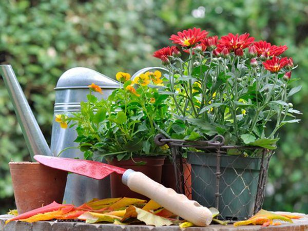 Jakie Kwiaty Sadzimy Jesienia Herbs