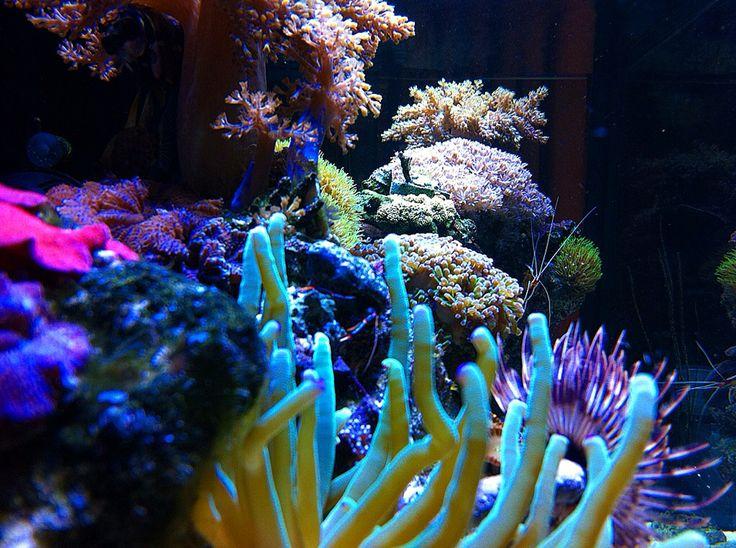 Todo vivo corales , arrecife