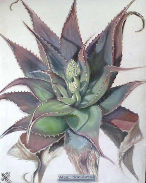 Aloe Maculata, After Frost ~ Block Mounted Oil Painting by Dawn Du Preez #DawnDuPreez
