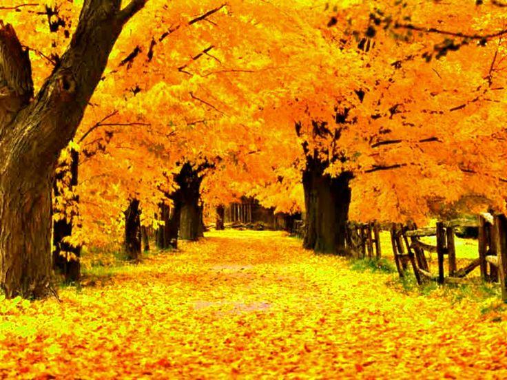 「秋の天気 画像 フリー」の画像検索結果