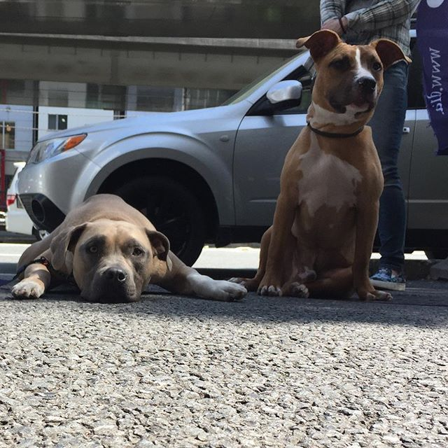 #Diara#ディアラ#馬肉#馬肉専門店#愛犬#愛猫#食事#ドッグフード#犬ごはん#手作りごはん#おやつ#犬おやつ#ローフード#Rawfood#生肉#生食#ディアラでたむろ#ディアラで休憩#元町#横浜#中華街#元町中華街#アメリカンピットブルテリア
