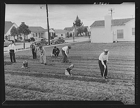 Victory Gardens -- for family and country -- is necessary during the early stages of growth. The soil should be well watered and watering sh...