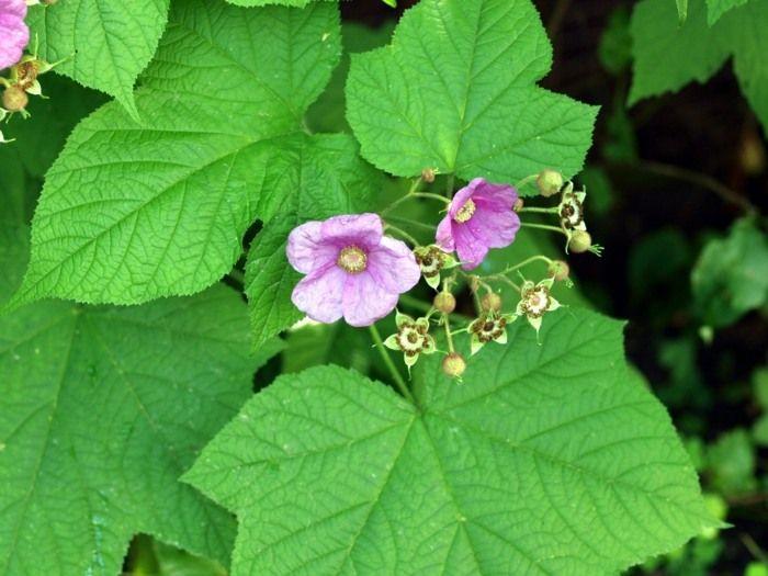 Quelles espèces de plantes d'ombre cultiver dans nos ...