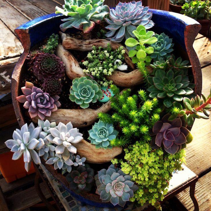Les 25 meilleures id es de la cat gorie pot de jardin - Composition plantes grasses interieur ...