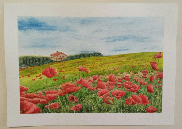 Campagna toscana il colore rosso dei papaveri spicca tra le sfumature dell'erba  Acquerello su carta Fabriano