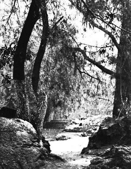 17 best images about jardines del pedregal on pinterest for Jardin 17 luis barragan
