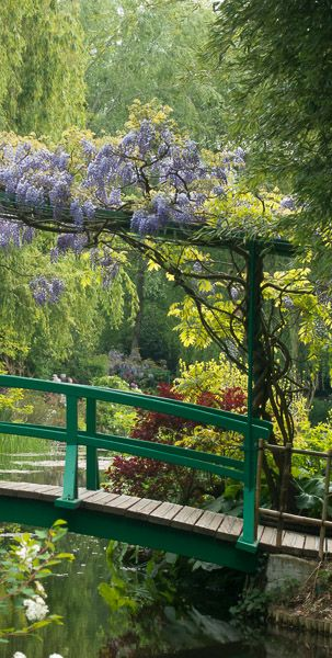Whisteria growing above a bridge spanning the stream in Jardins de Claude Monet in Giverny, France