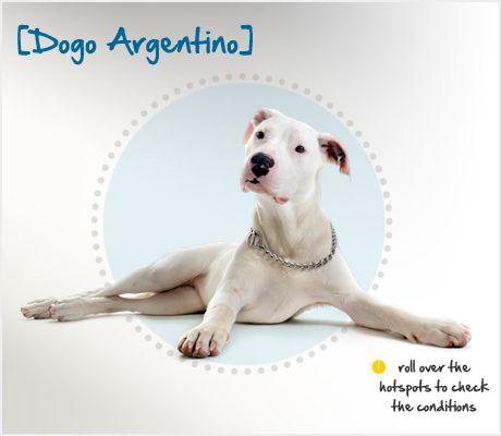 Top Dogo Chubby Adorable Dog - c9804ef3dcd96c8e5b5b9fc7f81f5291--maremma-sheepdog-did-you-know  Best Photo Reference_191762  .jpg