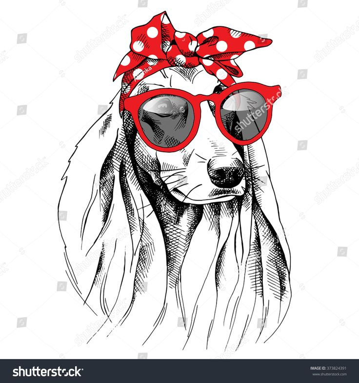 Dog with long ears portrait in a red headband and with sunglasses. Vector illustration.