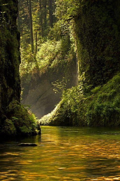 Golden Reflection - Eagle Creek, Oregon