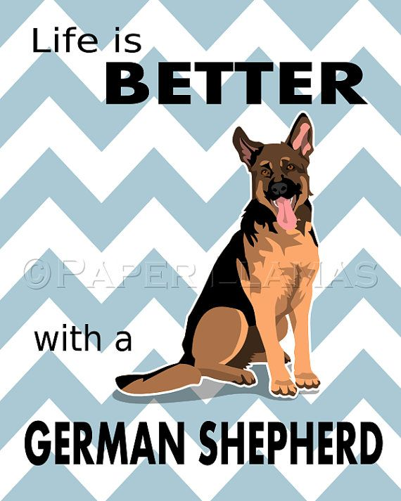 You bet it is!!! :) I have had German Shepherd mixes most of my life and an awesome pure breed