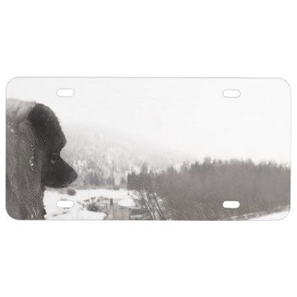 Keeshond at Shadow's Creek License Plate - dog puppy dogs doggy pup hound love pet best friend