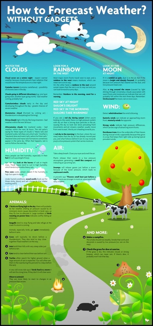 Low-Tech Weather Forecasting.: Info Graphic, Idea, Gadgets, Stuff, Weather Forecasting, Forecastweather, Forecast Weather, Infographics, Science