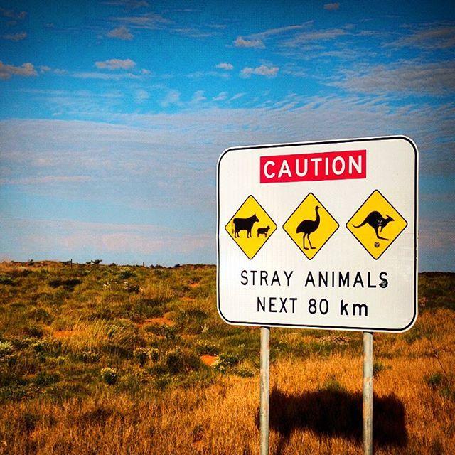 • R O A D S I G N •  And, probably as #Australian as it gets! Watch out for #WildLife  #Roadsign #Australia #AusLife #Kangaroo #Emu #Cattle #WestCoast #WildWildWest #Road #OpenRoad #AustralianLife