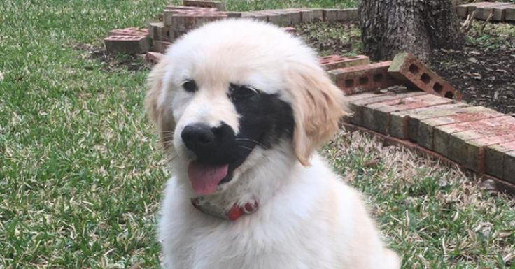 Enzo has a condition called a pigmented somatic cell mutation, which causes a black splotch around one of his eyes.