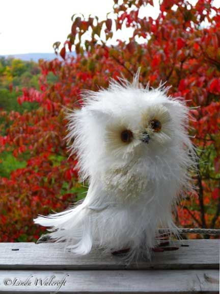 Weird little fuzzy owl, I think. Poor little thing is having a bad hair day. :)