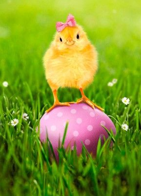 Enjoy the tweets! Happy Easter