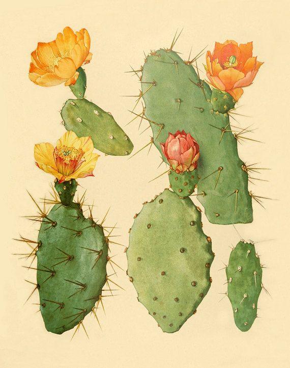 He encontrado este interesante anuncio de Etsy en https://www.etsy.com/es/listing/160751317/vintage-cactus-art-print-antique-prints