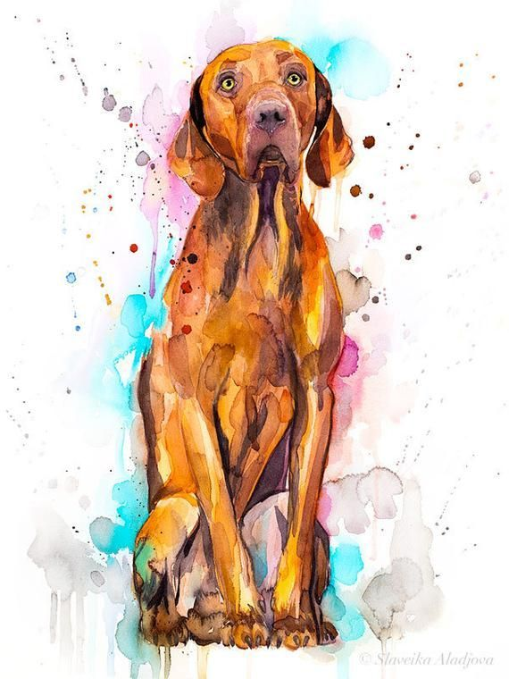 Vizsla Dog Watercolor Painting Print By Slaveika Aladjova Animal