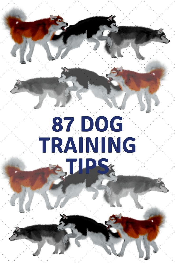 87 Dog Training Tips