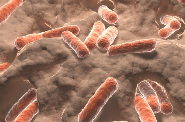 Probiotic Bacteria May Help Reduce Anxiety And Boost Memory Performance | IFLScience