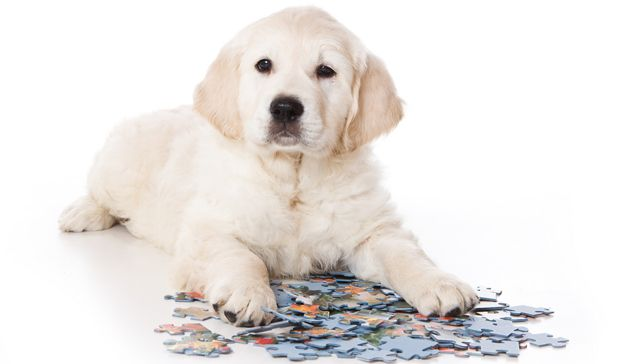 10 brain games to play with your dog #pets #dogs