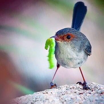 ✨the early bird gets the worm✨    Een uurtje eerder je bed uit kan je veel brengen! Wil jij #ervaren hoe je dag #positief beïnvloed wordt als je die begint met een #uurtje #yinyoga ? #7:30-8:30 #am  #gewoonomdathetkan #maandagochtend #woensdagochtend #mondaymorning #wednesdaymorning #nomorebluemonday #happyhumpday #positivestart #heeljezelf #empoweryourself #yogainspiration #yogabymir