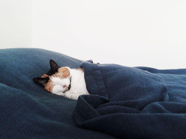 Soft Blankets.