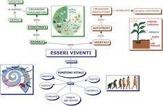 esseri_viventi - Mappa Concettuale