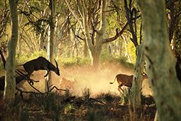 Go on a walking tour in the Kruger National Park - the Pafuri walk #travel #SouthAfrica