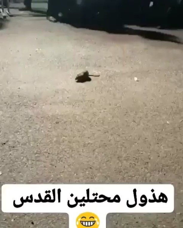 جلنار On Instagram خلا ص عرفنا الحل