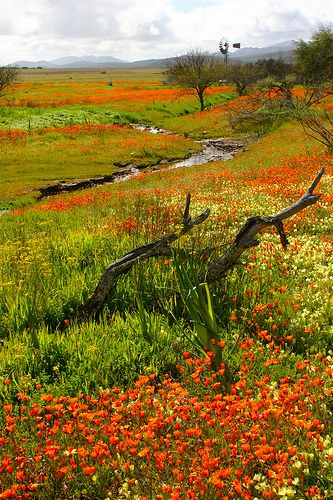 Namaqualand, South Africa by KidsLoveAnimals, via Flickr