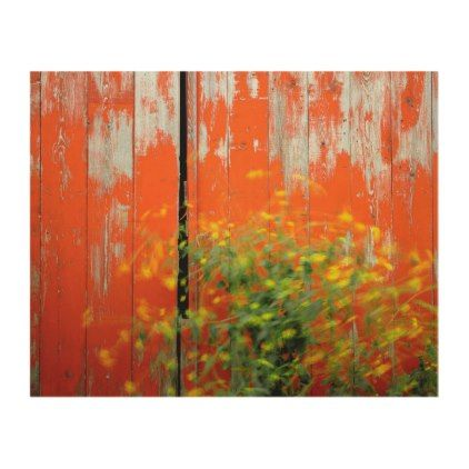 Mustard Plant at Red Barn | Wallowa County OR Wood Wall Art - barn gifts style ideas unique custom