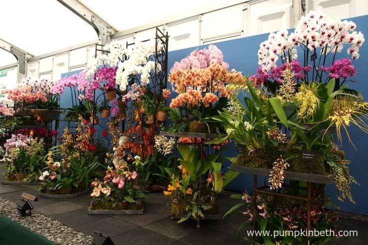 Vacherot & Lecoufle were awarded a Gold Medal, and the prestigious title of the Best Exhibit in the Floral Marquee, for this beautiful display of orchids, at the RHS Hampton Court Palace Flower Show 2017.
