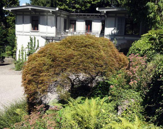 Der Japanische Fächerahorn (Acer palmatum) erfreut sich großer Beliebtheit in allen möglichen - und unmöglichen - Situationen. Überzeugend ist er nur in gediegenem Ambiente, gerne mit etwas exotischem Flair.