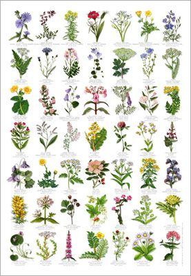 Wild Flowers Identification Poster