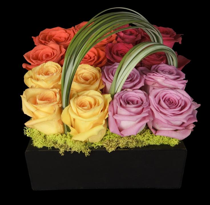 roses pave´ OVANDO