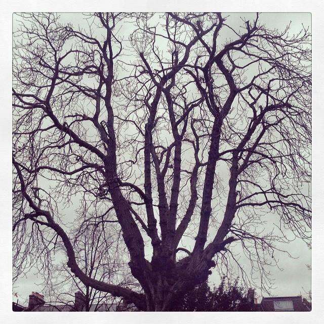 The witching #treeoflaxmi. 8.54am. Sunday, Feb 9.
