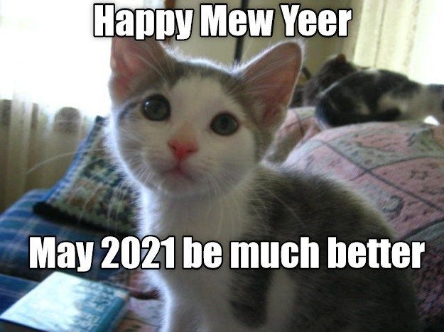 Welcome 2021 In 2021 Cats I Like Dogs Pretty Cats