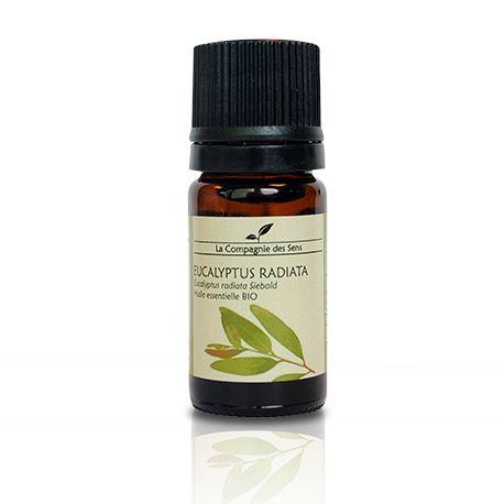 L'huile essentielle d'Eucalyptus Radiata, utile contre les otites