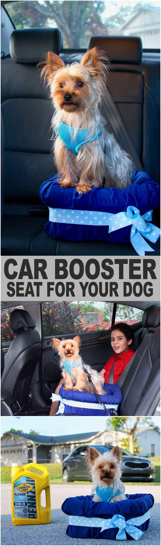 106 besten Dogs Bilder auf Pinterest | Haustierprodukte ...