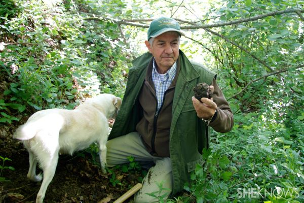 A culinary adventure: Truffle hunting in Alba, Italy...so doing this in Piemonte!!!