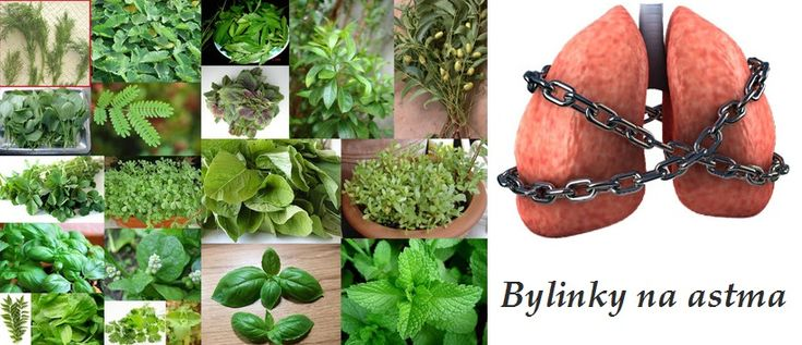 astma zanet prudusek byliny bylinky babske rady caje