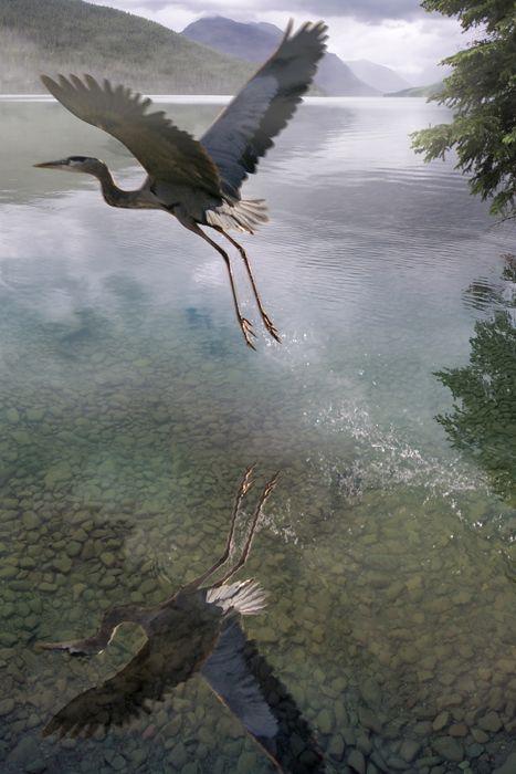 wanelo.com/... - Flight by photogenetik