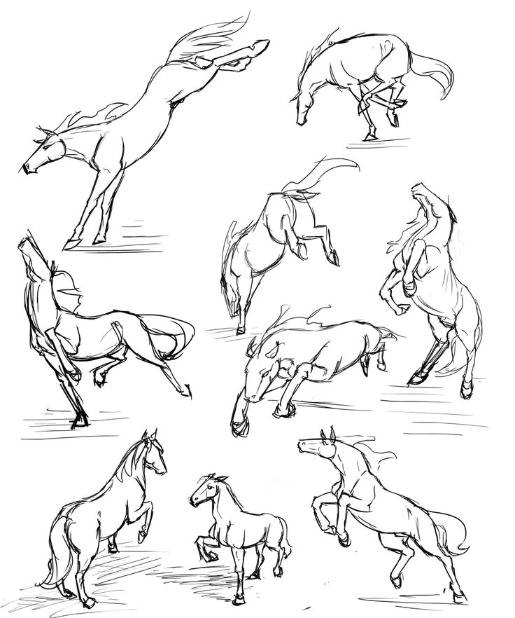 55 best Horse Anatomy images on Pinterest | Horse anatomy, Horse ...