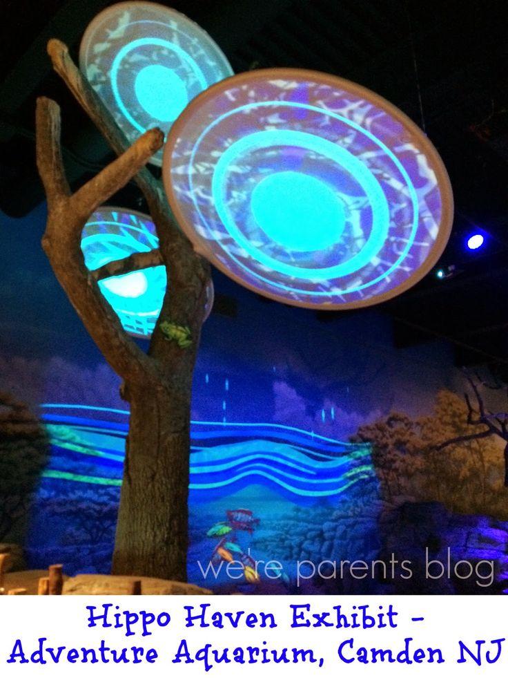 Looking for a great aquarium? Check out the Camden aquarium in NJ - Adventure Aquarium!