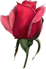 Image result for rose buds