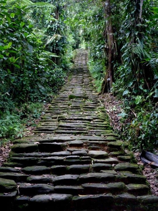 twentythousandleagues:    Amazon Rainforest, Colombia  colombia <3