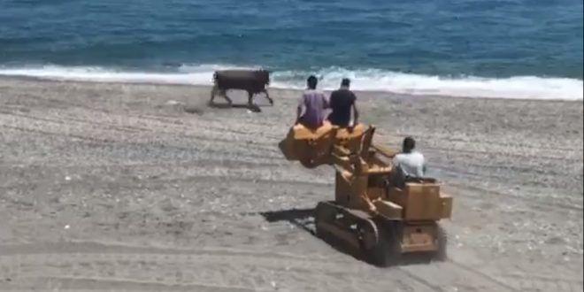 Messina: mucca in fuga sulla spiaggia. Abbattuta a fucilate